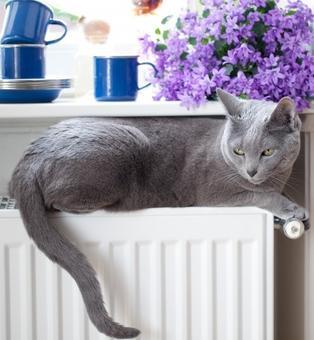 Appartement : pour que votre chat trouve son bonheur