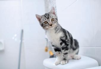 Toilettes pour les chats : est-ce que ça marche ?