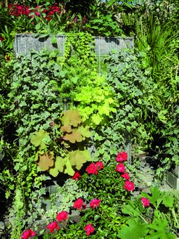 Aménager un mur végétal dans son jardin