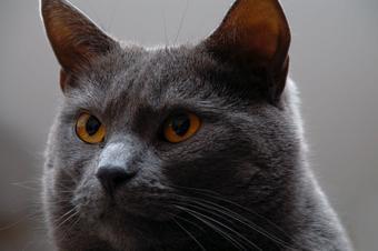 Un chat revient dans sa maison dix ans après