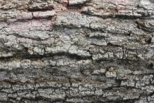 Entretien annuel des chaudières à bois : ce qu'il faut savoir